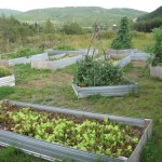 Garden | Raised vegetable beds